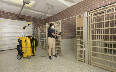 NTC 1750 – Kennel Cleaning – Spraying with Mask